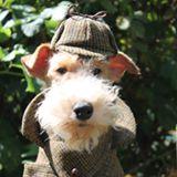 tommys-terrier-tweeds